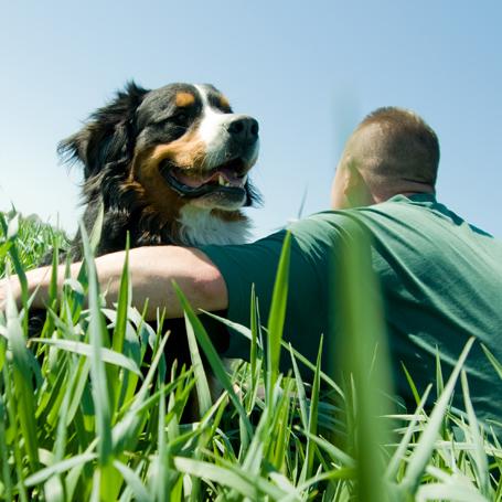 Senior Pets - Ravenna Animal Hospital