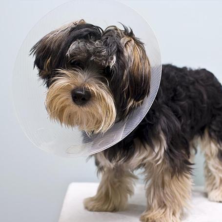 Spay & Neuter - Ravenna Animal Hospital