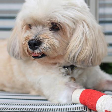 Pet Surgery - Ravenna Animal Hospital