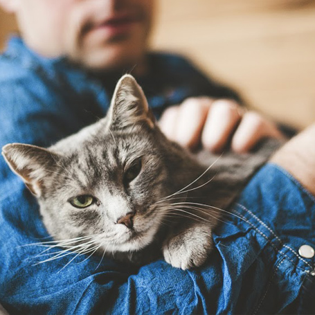 Preventative Care for Cats - Ravenna Animal Hospital