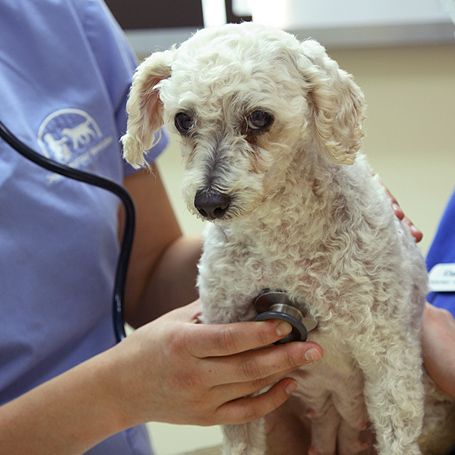 Anesthesia - Ravenna Animal Hospital