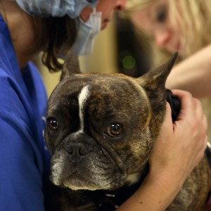 Endoscopy - Ravenna Animal Hospital