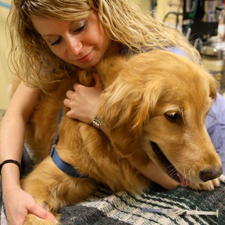 Pain Management - Ravenna Animal Hospital